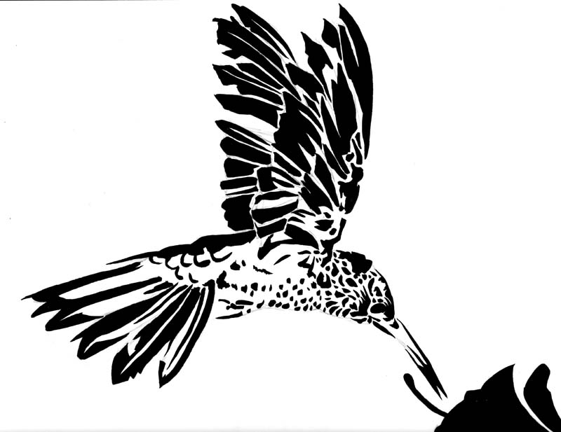 Hummingbird Stencil Another hummingbird stencil